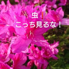 花のある暮らし/暮らし 🍀もりもりんこ🍀  Good morni…(3枚目)