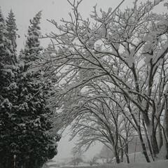コロナで中止/雪まつり/雪まつりイベント/東北の冬/東北 🍀真っ白な世界🍀  毎日降っている割には…