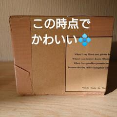 感謝/プレゼント企画/ハンドメイド/リビングあるある/暮らし 🍀ハズレたのに当たり🍀  f19fv36…(2枚目)