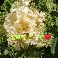 保護苗ちゃん/ガーデニング/庭のある暮らし/花のある暮らし/緑のある暮らし/玄関 🍀花束をどーぞ🍀  ぐっともーにんぐ で…(1枚目)