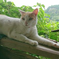 猫派 近所のお友達ネコ ちょこちょこ餌をあげて…