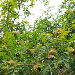 ばらの実/バラ/おでかけ/植物園/植物/花 ♡サンショウバラの実  高山植物園…まだ…(3枚目)