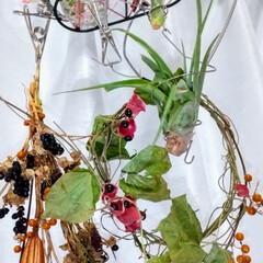 植物/ハンドメイド/雑貨/多肉植物/観葉植物 ♡エアープランツ ♡ヒオウギ ♡タンキリ…