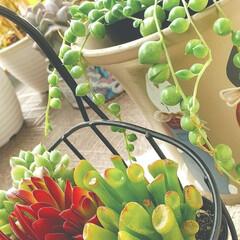 多肉植物/暮らし ♡多肉植物 ♡新入りさん  食料品の買い…