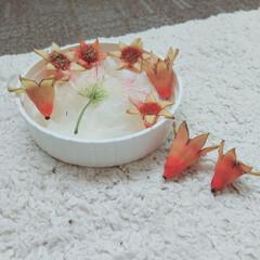 アカツメグサ/ねむの木/ザクロ/植物/実/花/... ♡ザクロ ♡ねむの木 ♡アカツメグサ  …(2枚目)