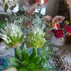花/野菜/暮らし ・ 冷蔵庫で発見👀‼️  わぁ❣️ (残…(3枚目)