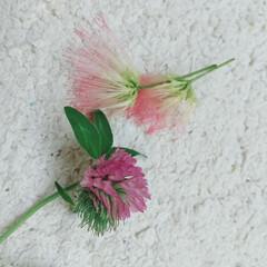 アカツメグサ/ねむの木/ザクロ/植物/実/花/... ♡ザクロ ♡ねむの木 ♡アカツメグサ  …(3枚目)