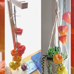 暮らし/植物/夏インテリア/季節インテリア ♡ほおずき  そこにあるだけでかわいいね…