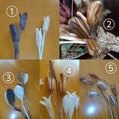 実殻/植物/ハンドメイド/ドライフラワー ♡実殻あれこれ…  ①アヤメ ②コゴセユ…(3枚目)