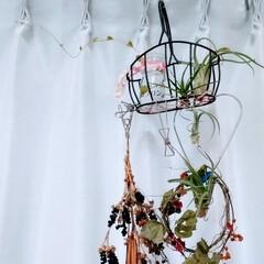 植物/ハンドメイド/雑貨/多肉植物/観葉植物 ♡エアープランツ ♡ヒオウギ ♡タンキリ…(2枚目)
