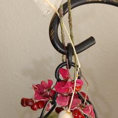 植物/木の実/ハンドメイド/雑貨/アンティーク/ドライフラワー ♡木の実 ♡マユミ…その後  マユミちゃ…(2枚目)