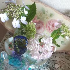 紫陽花/雑貨/おしゃれ/暮らし 今朝も元気な紫陽花から powerをもら…