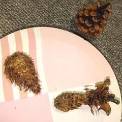 木の実/おでかけ/エビフライ/森のエビフライ/松ぼっくり ♡森のエビフライ🍤  誰が食べた⁉️ の…(1枚目)