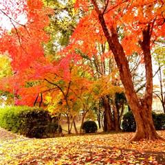 公園/紅葉/おでかけ/暮らし 家の近くにこんな素敵な場所があったとは⁉…