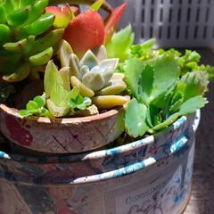 寄せ植え/多肉植物/雑貨/暮らし ♡多肉植物 ♡植え替え ♡寄せ植え ♡鉢…