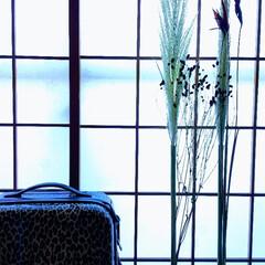 ドライフラワー/植物/インテリア/ハンドメイド/おしゃれ/花/... ♡パンパスグラス  『まっすぐ・細長い子…