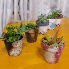 多肉植物/ペイント/雑貨/ハンドメイド ♡ペイント ♡ミニ植木鉢  今日のは、ク…