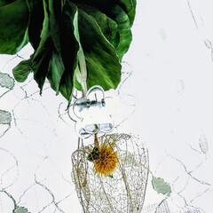 ほおずき/植物/雑貨/インテリア/ハンドメイド/花 ♡ポポラス ♡透かしほおずき  最近、👛…