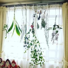 ツリー/リース/ドライフラワー/自然素材/クリスマス/クリスマス2019/... 普段は用がないと入らないお部屋の窓。 今…