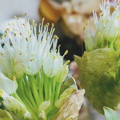 花/野菜/暮らし ・ 冷蔵庫で発見👀‼️  わぁ❣️ (残…