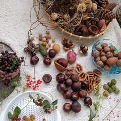 ドライフラワー/木の実 木の実好きには、たまらない季節。  お出…