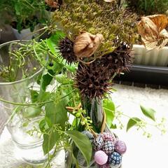 植物/ドライフラワー/雑貨/インテリア/ハンドメイド/花 枯れたガク紫陽花…  半分お山の公園に行…