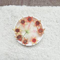 アカツメグサ/ねむの木/ザクロ/植物/実/花/... ♡ザクロ ♡ねむの木 ♡アカツメグサ  …(1枚目)
