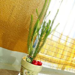 グリーンライフ/エリカ/クリスマス2019/リミアの冬暮らし/暮らし ♡エリカ Xmasスワッグ作るときにいく…