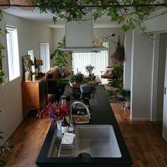 キッチン/パナソニックキッチン/アイランドキッチン/インテリア/植物のある暮らし/リビング/... ❣️いつもの風景 . 私は ここから見る…