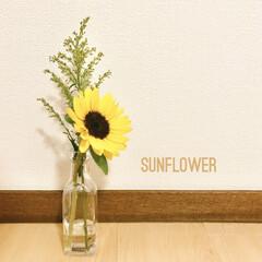 夏先取り/向日葵/ヒマワリ/花のある暮らし/ダイソー 投稿し直し、スミマセン💦  久しぶりに同…