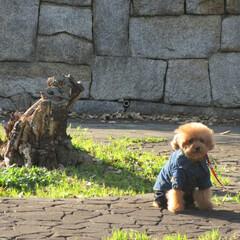 お散歩🐾/切株/お座り/おでかけワンショット お散歩🐾の途中切株を見ると何処と無く、犬…