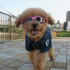 笑顔/愛犬/No.1/うちの子ベストショット 笑顔は愛犬のNo.1ベストショット😄❗️…