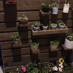 多肉寄せ植え/多肉棚/玄関あるある 上の棚は可動式😍 下の花壇には季節のお花…