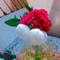紫陽花/多肉植物/寄せ植え_華/寄せ植え/寄植え/ギター/... 今日の多肉ちゃん🌿&今日の薔薇🌹  この…(4枚目)