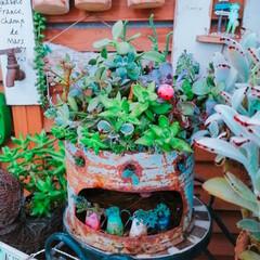 succulents/succulentgarden/リミとも部1期生/リミとも部/LIMIAアンバサダー/広島たにらー/... 今日の多肉ちゃん🌿  暑い夏を頑張ってく…