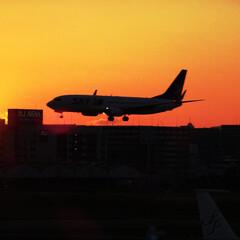 飛行機/空港/福岡空港/スカイマーク 夕暮れ時に福岡空港へ着陸する飛行機の写真…
