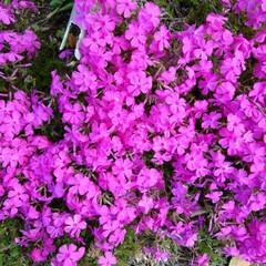 春のフォト投稿キャンペーン/はじめてフォト投稿 美しい花