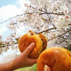 お弁当/手作りパン/お花見/桜/春のフォト投稿キャンペーン/LIMIAごはんクラブ/... お外で食べる手作りバーガー🍔 中は前の日…