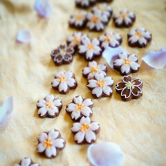 アイシングクッキー/桜/わたしのごはん/おでかけ/グルメ/フード/... spring has come 桜が少し…