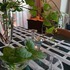 おうち時間を楽しむ/おうち時間/観葉植物/ベランダ/リビング リビングには背の高いアレカヤシ🌴 テーブ…(2枚目)
