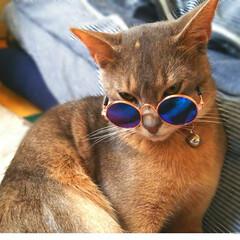 猫好き仲間/猫好きさん/猫好き仲間募集/ねこと暮らす/猫との暮らし/猫部/... 強面風な感じになっちゃった(笑)