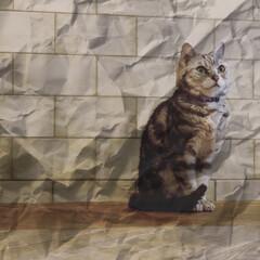 猫と暮らす家/ハイブリッド家族/わたしのGW 👊🖐👊🖐