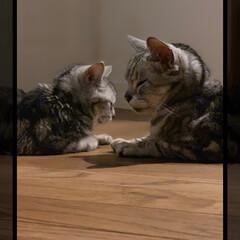 猫派/猫と暮らす家/ハイブリッド家族 😪💤