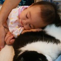 猫/ねこ/ネコ/おやすみショット みんなでおやすみ~zzz