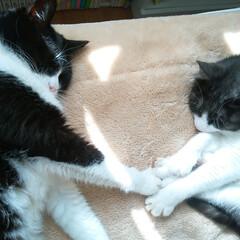猫/ネコ/ねこ/おやすみショット 仲良くおやすみzzz