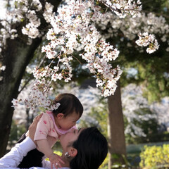 平成最後の一枚 平成最後の桜と 平成最後の 女の子とその…