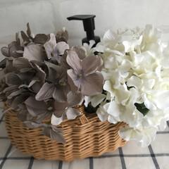 100均/インテリア/雑貨/花 困ったときの造花  インテリア雑貨を棚に…(1枚目)