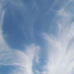 Happy/幸運/天使 翼/天使の羽/バレンタイン2020 姿は見えないけど、広げた翼がわかるかな?