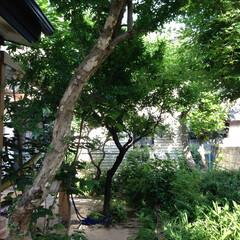 ガーデンリフォーム/リガーデン/真砂土舗装/天然石貼り/ガーデンメンテ/既存樹/... ザクロの花咲く夏場のメンテナンス前のお庭…