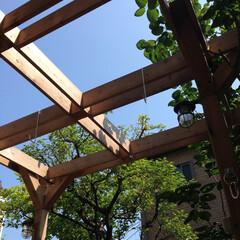 パーゴラ/サンキャッチャー/マリンランプ/既存樹 青空に木々の緑が何重にも透けて重なり、サ…